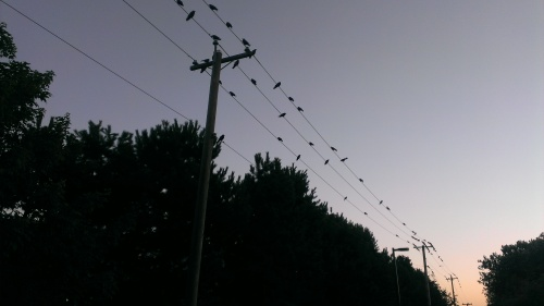 Vancouver Crow Sunset